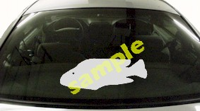 FSH136 Parrot Fish Decal